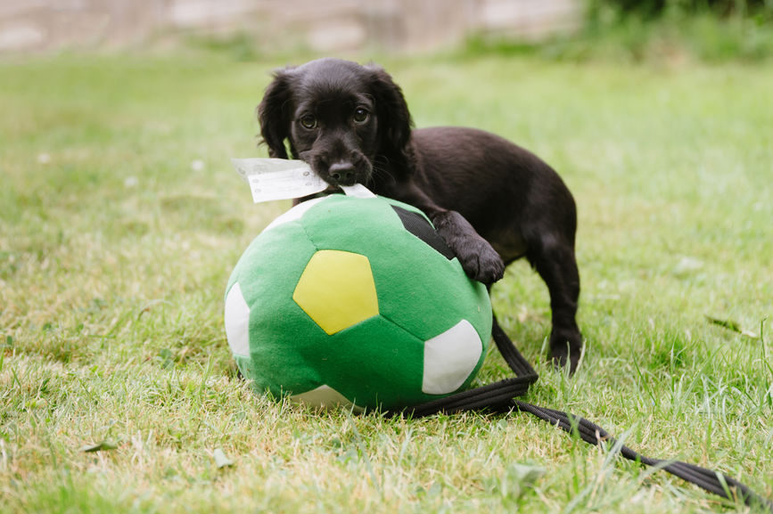 How to Make Sure Your Dog Toys (and Treats!) Are Safe