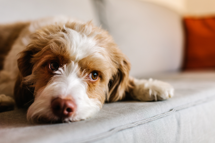 The 7 Emotions Pups Experience (and How to Understand Them)