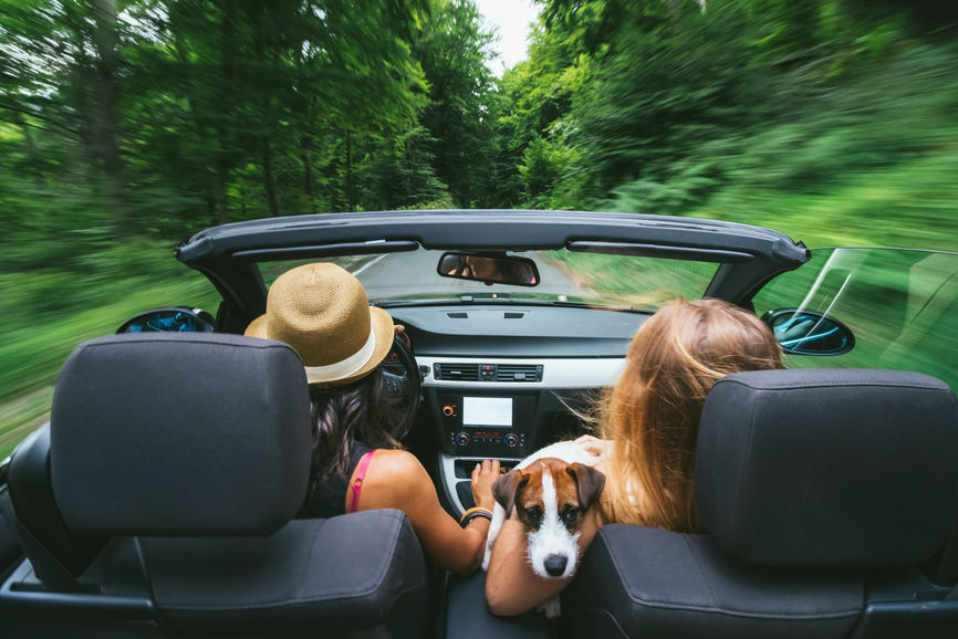 The 5 Best Pup-Friendly Road Trips in the U.S.