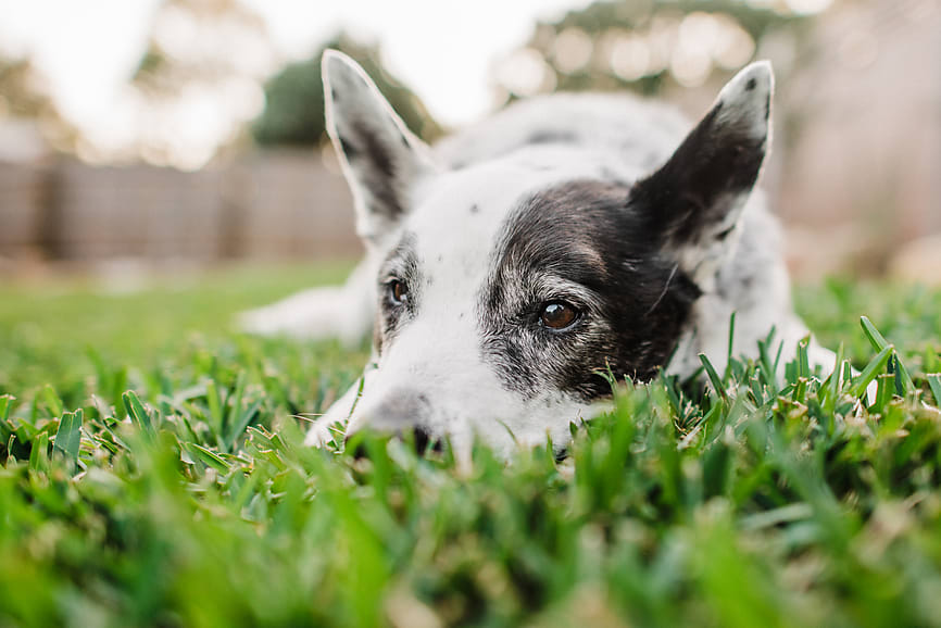 Everything You Need to Know About Your Dog's Seasonal Allergies